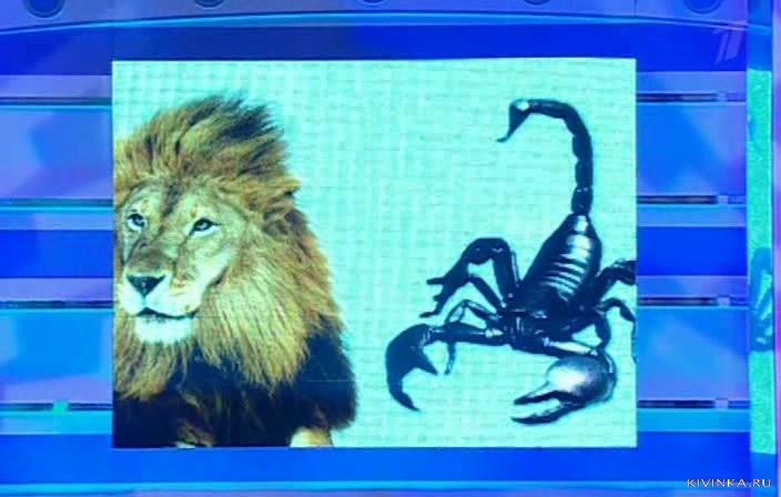 Отношения лев с скорпионами